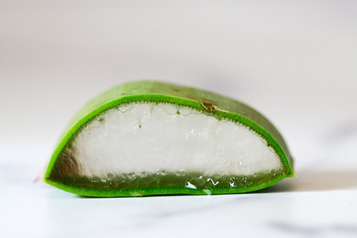 A close up photo of a slice of aloe vera leaf showing the outer skin, inner gel, and latex in between.