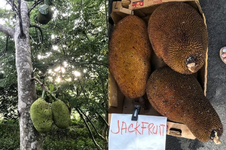 Photos of green jackfruit growing on a tree in Hawaii and ripe jackfruit at a market in Hawaii.