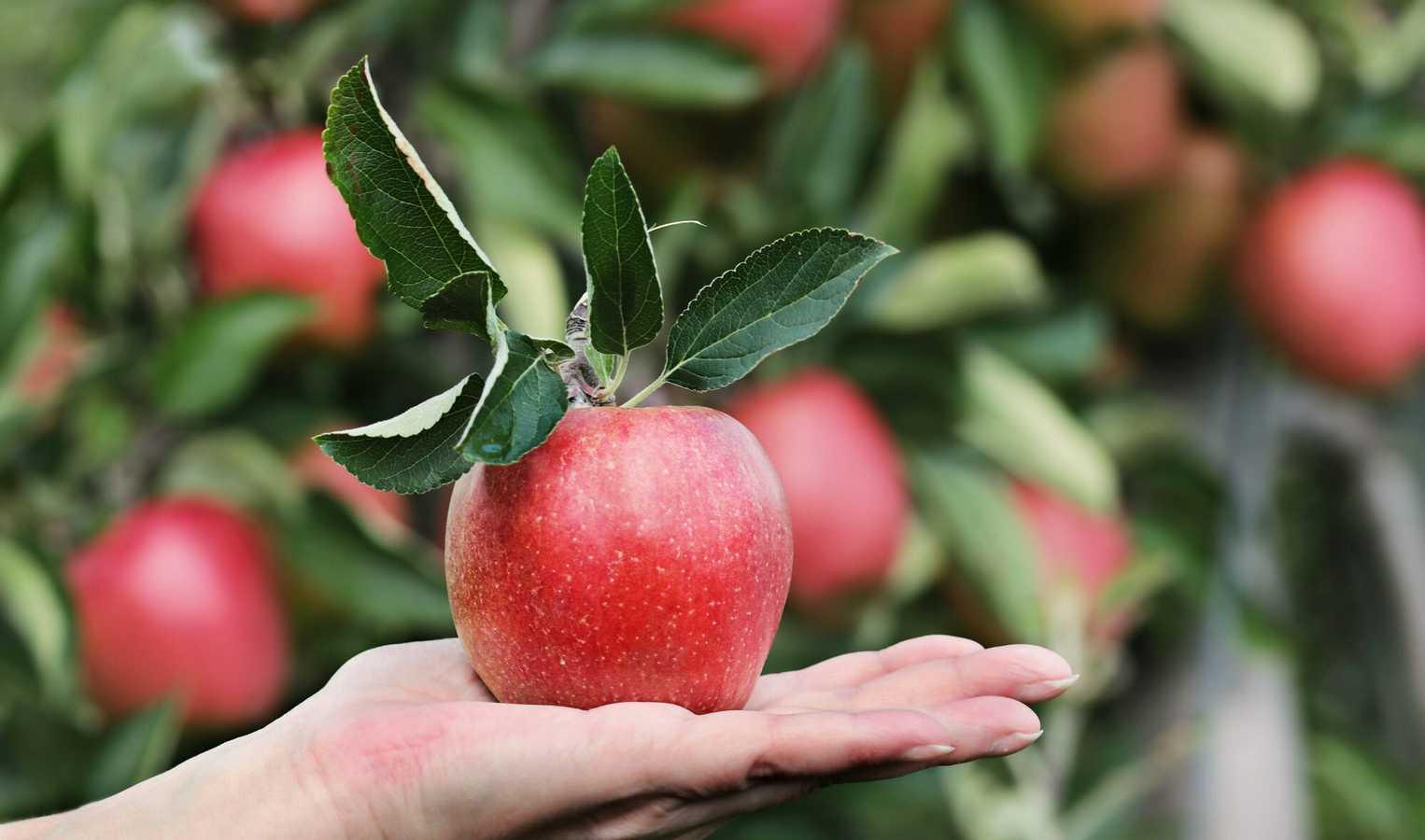 An apple sits on a hand.
