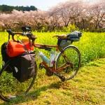 ロードバイクで巾着田へソロキャンプに行ってみた