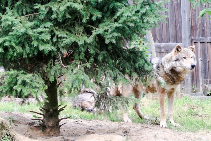 Gaia, zoo, Kerkrade, dierentuin, mooi, weer, prachtig, goedgekeurd
