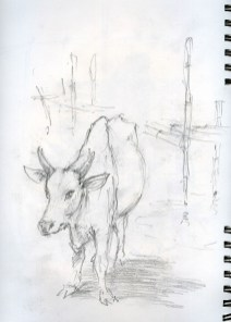 Lac-inle-bufflonne-1800
