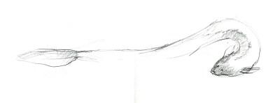 marche-poisson-anguille-1800