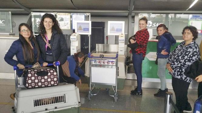"""I volontari dell'Associazione """"Porgi l'altra zampa"""" in aeroporto accompagnano i cagnolini adottati"""