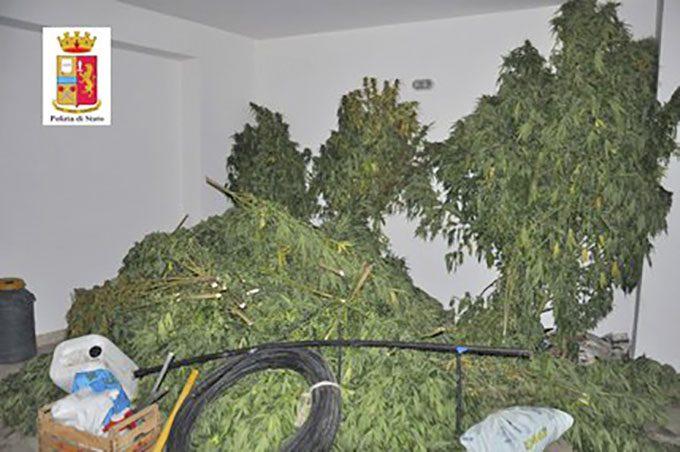 Adrano, Polizia sequestra piantagione di marijuana