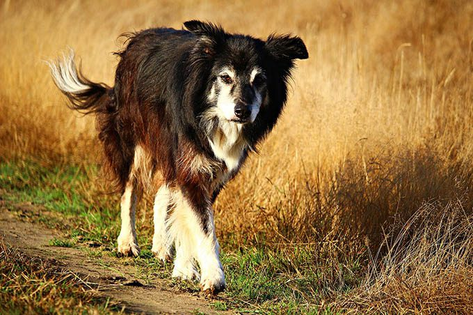 """Adrano, al via """"Adotta un cane"""" ospite dal canile"""