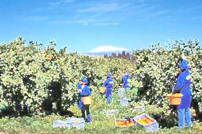 Braccianti: da oggi in liquidazione la disoccupazione agricola