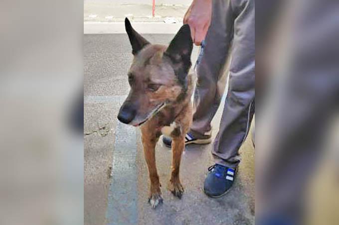 Catania, abbandona cane legandolo a un palo: denunciata dalla Polizia
