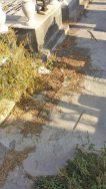 paternò_degrado_cimiteri_04_09_2017_06