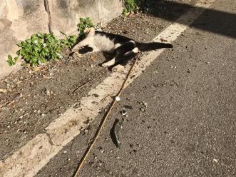 gatto_morto_licodia_29_12_18-1
