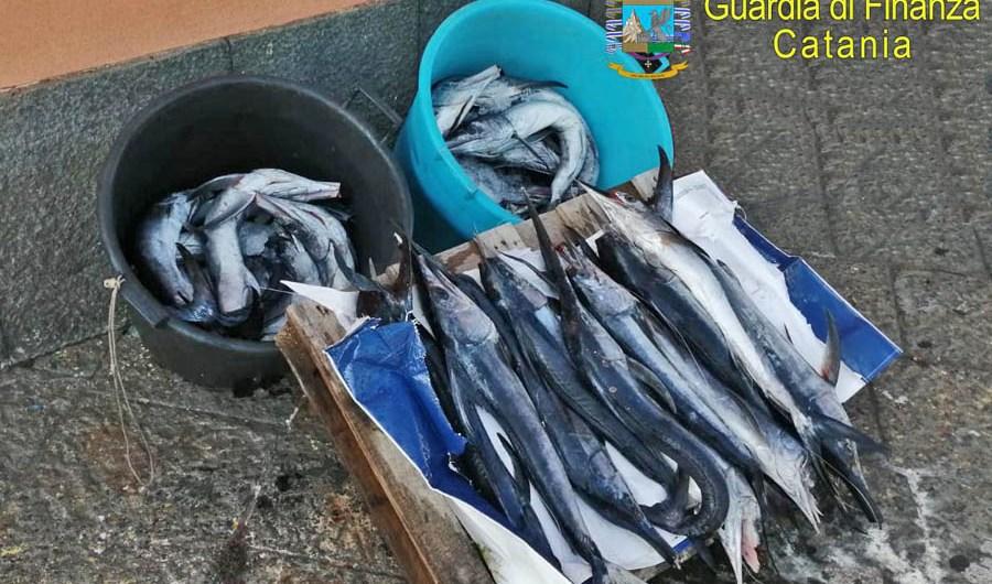 Catania. Gdf sequestra 43 esemplari di pesce spada novello