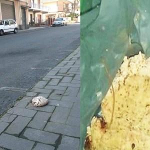 Belpasso. Covid non ferma gli avvelenatori di cani: per fortuna nessuna vittima