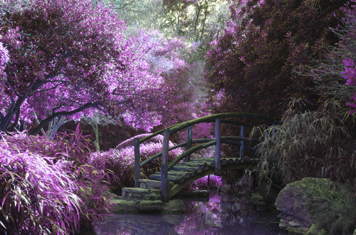 A bridge in a forest surrounded with purple flowers.