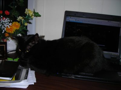cat with keyboard