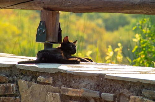 Cat sitting on a water well.