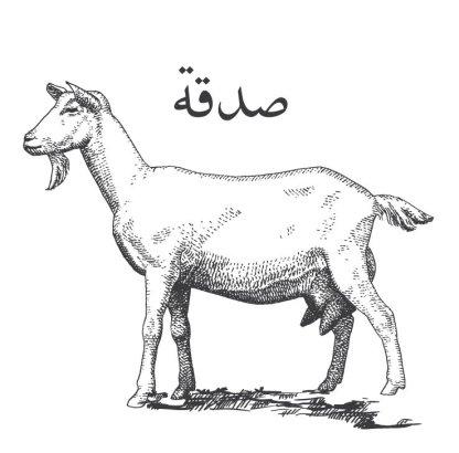 Sadaqa Sheep
