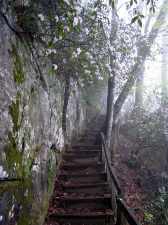 The trail ascending to the clouds beneath azalea blooms