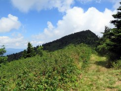 Looking back at Celo Knob