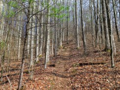 Open deciduous forest on the AT