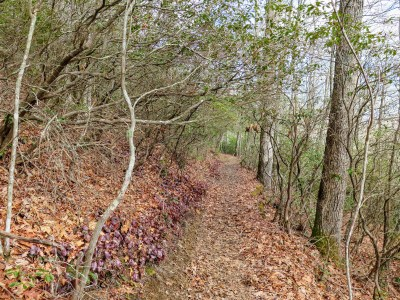 Occasional mountain laurel tunnel on the Appalachian Trail