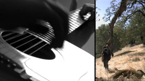AD- guitar-acorn tree