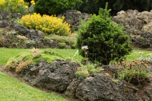 Stříhání trávníku kolem skalek je náročné