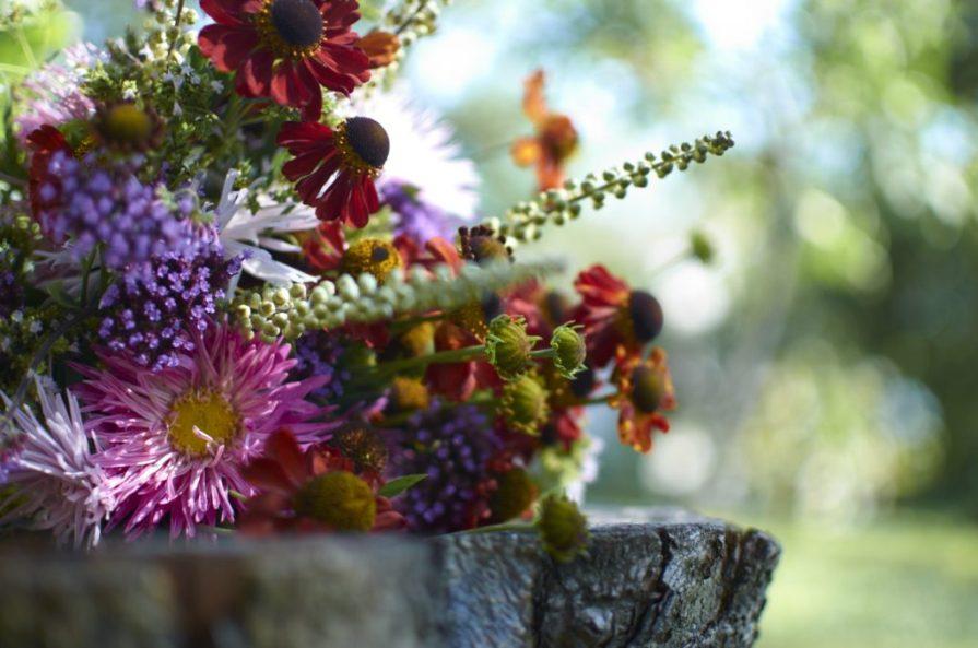 Květinová vazba ze zápleváků, ploštičníků, sporýšů a letních aster