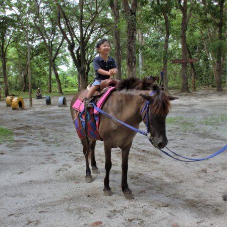 horseback riding z pro