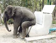 Gajah pun reti duduk..