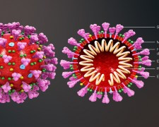 Is het Coronavirus voorspeld?