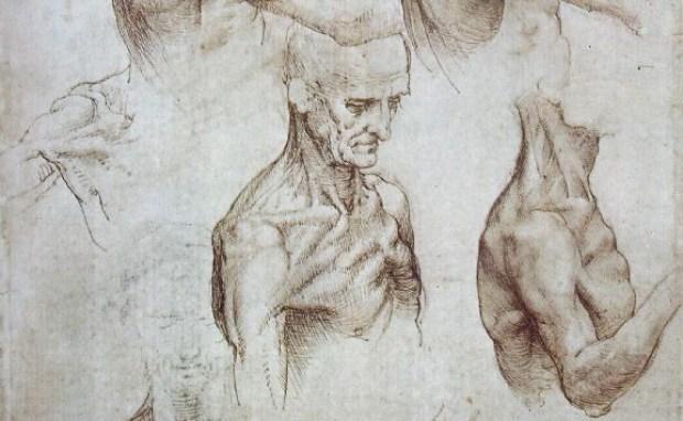 Muscles-Leonardo-zakiworld
