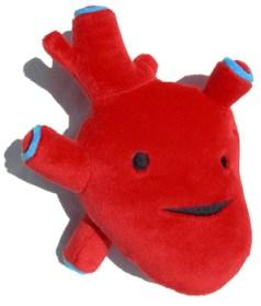 peluches-organes-coeur