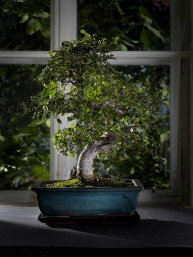 bonsai-love