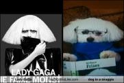 lady-gaga-totally-looks-like-dog-in-a-snuggie