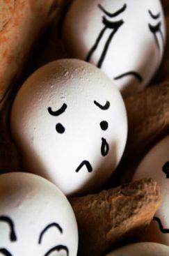 the_secret_life_of_eggs_14