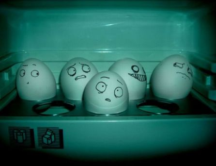 the_secret_life_of_eggs_50