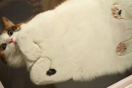 chat photo verre dessous