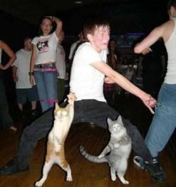 chats dansant