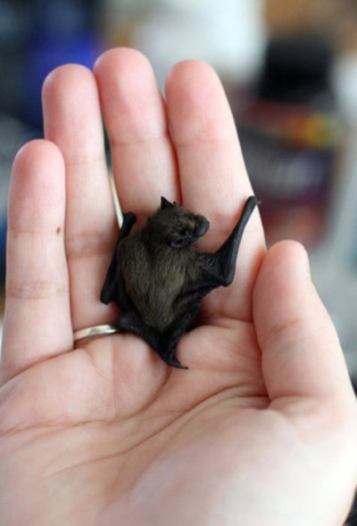 petit batman