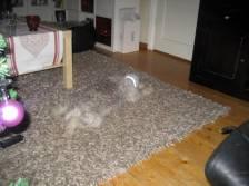 solid snake dog camouflage