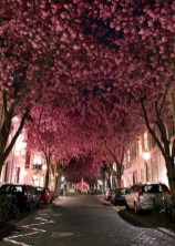 arbre rose rue