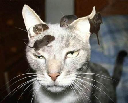 chat souris sur tete