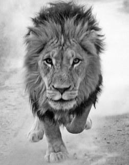 course lion