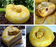 serpent gateau