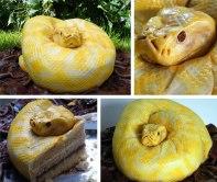 serpent gateau