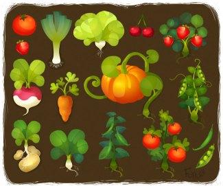 Legumes_Potager_Foya - foyaland