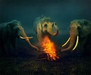 elephants devant feu de camp