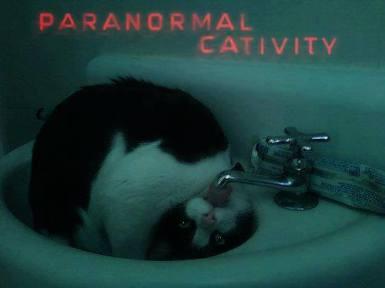 paranormal cativity