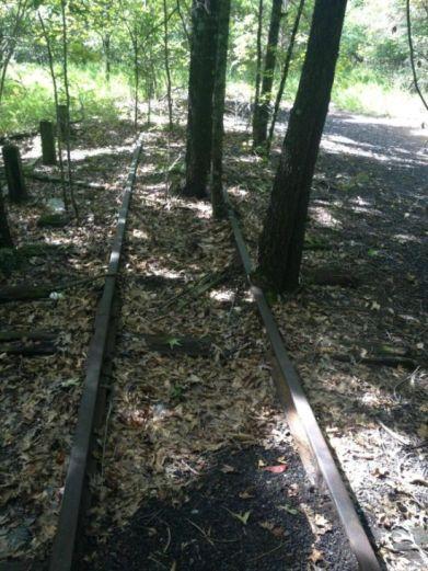 rails arbre