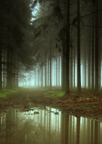 foret arbres